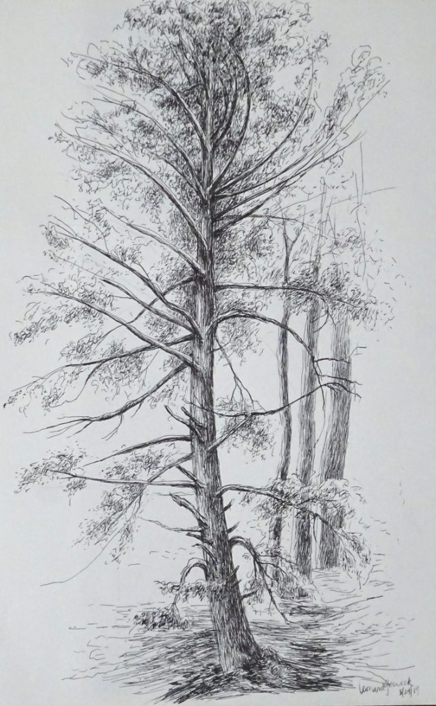 "Drawing for ""The Great Hemlock painting by new England artist, Leonard Gerwick"